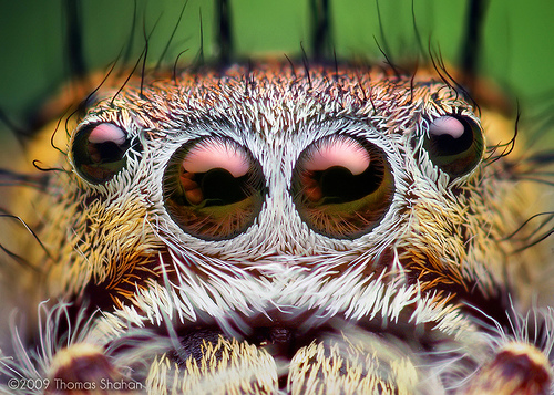 Here's looking at you, Anansi!