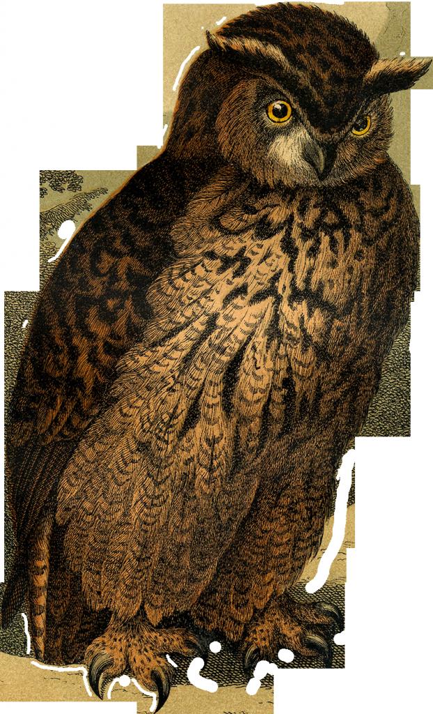 01_owl_graphicsfairy